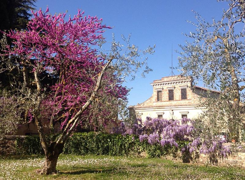 Felsina-primavera