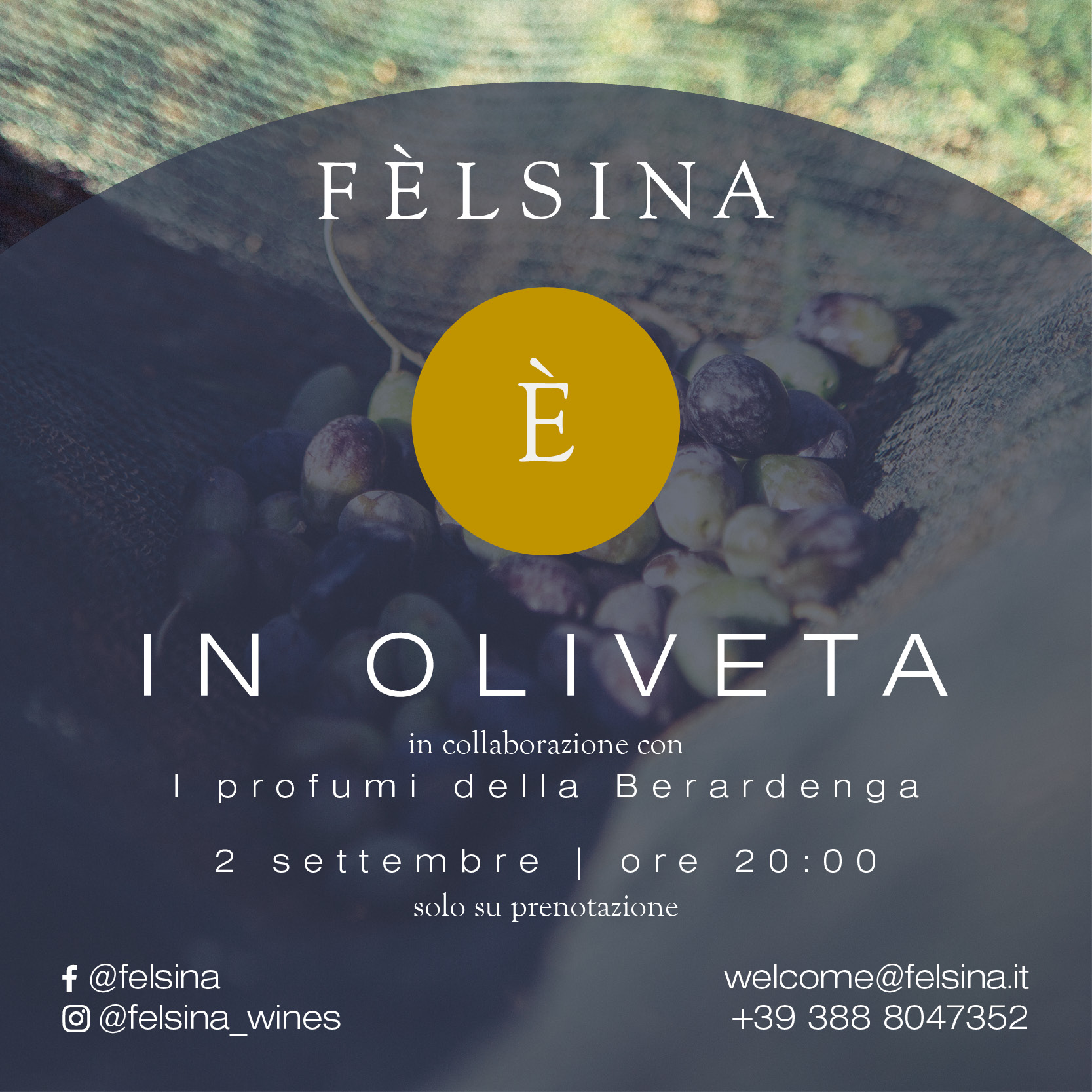felsina-oliveta-profumi-della-berardenga_box